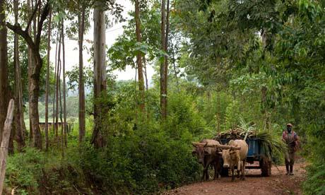 Farmer-in-Kenya