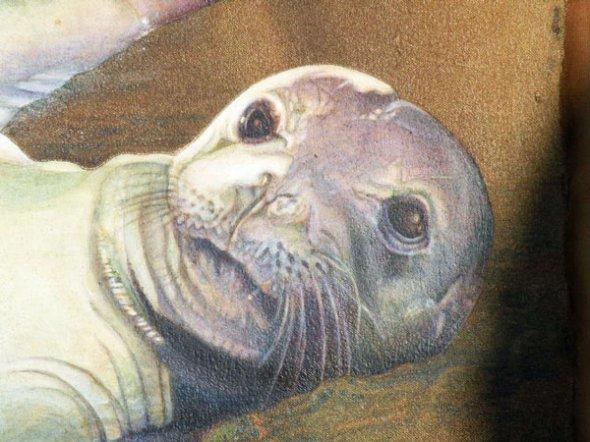 Monk Seal Baby Face