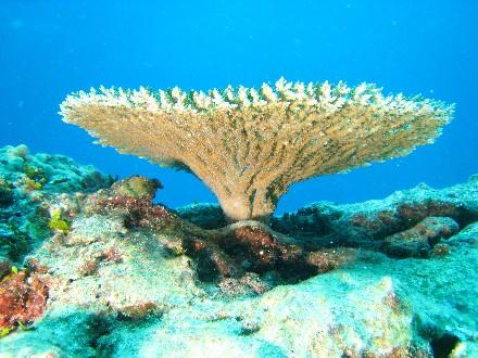 Coral Reef in Northern Hawaii