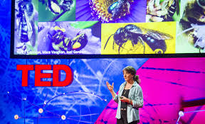 Marla Spivak - Why Bees are Disappearing