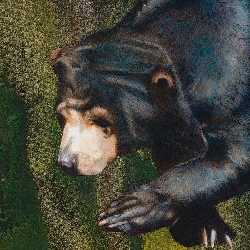 Sun Bear, from The Rama Exhibition