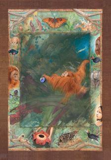 Animals Point of View - Orangutan