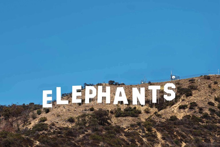 elephants in hollywood