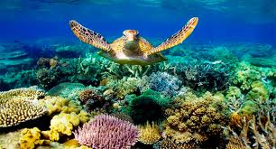 turtle in coral